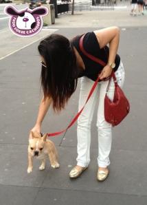 cachorro-deitando-na-rua